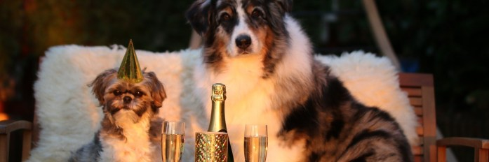 Embracing the Year of the Dog